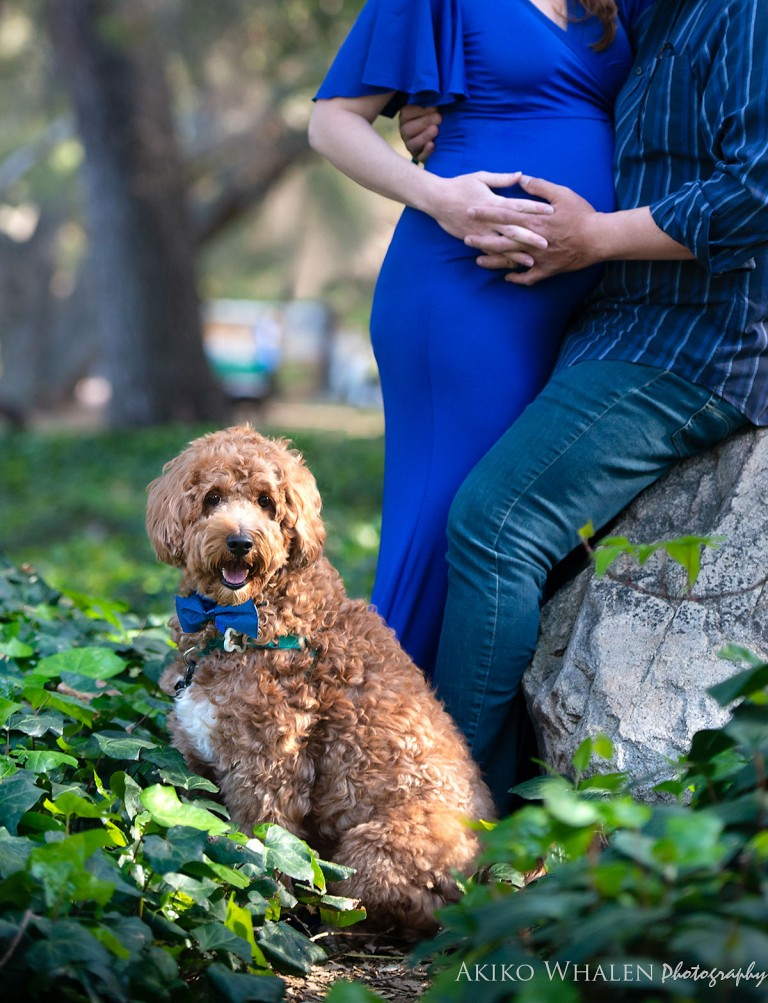 Maternity Photos, Maternity Photo Session, Pet Photography, Expecting something special, Maternity Photo Session with pets, Los Angeles Photographer, Akiko Whalen Photography, On location maternity session, Then and now photo session